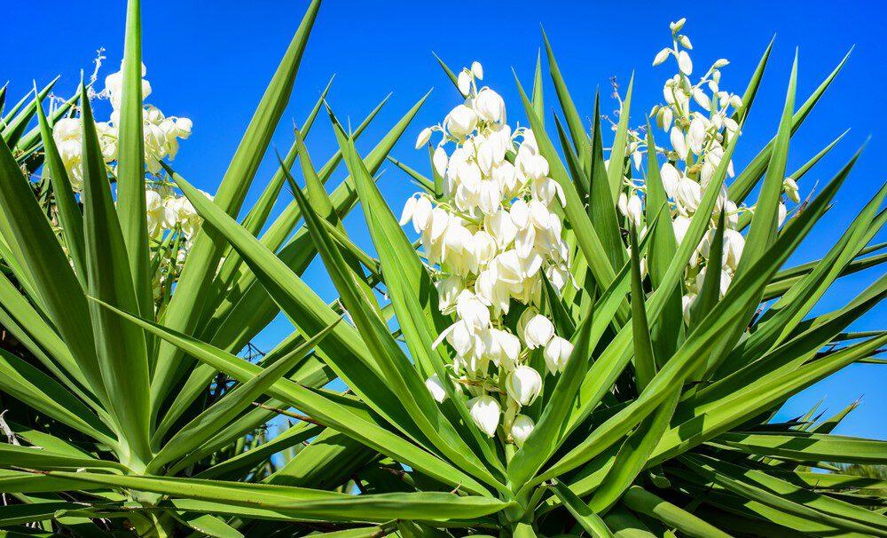 Zeer 5 planten die goed tegen warmte en felle zon kunnen - Pokon &PA58