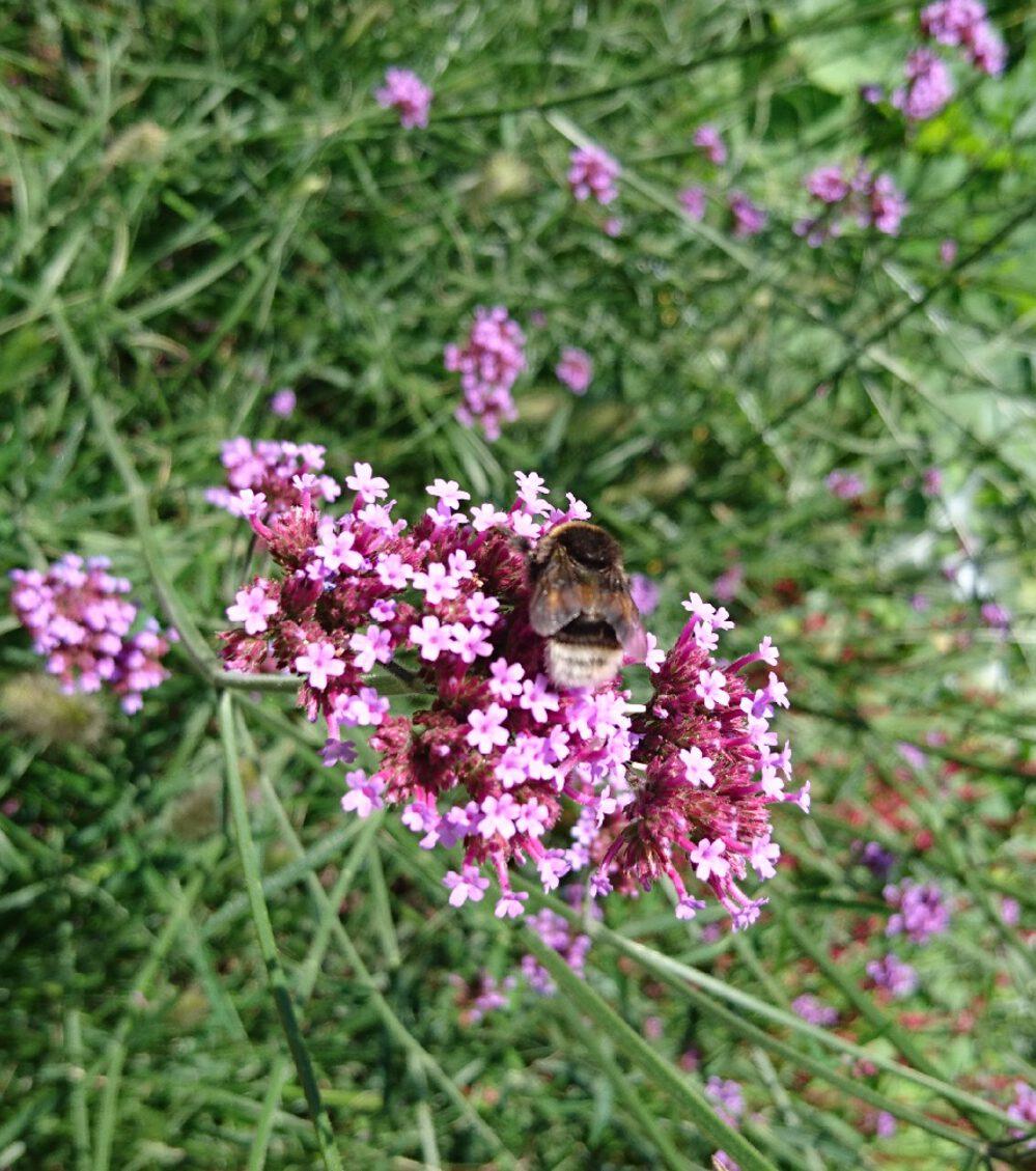 Planten Voor Bijen.Bloemen Voor De Bijen En De Vlinders Pokon Groen Doet Je Goed